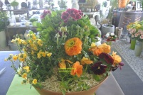 Coupe de plantes 25€ ou 50€